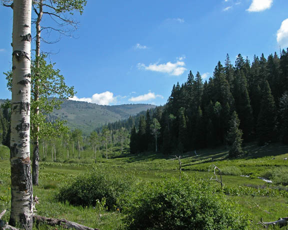 A photo of the Upper Mill Creek Meadow. This photo was shot at a low angle and thus captures the vast green meadow, coniferious and deciduous trees, as well as the moutains in the distance. The bright blue sky takes up half the photo while the sun illuminates the landscape.