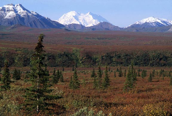 Mount Denali and the autumn tundra along Savage River in Denali National Park and Preserve, Alaska Range.