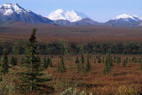 Mount Denali and the autumn tundra along Savage River in Denali National Park and Preserve, Alaska Range.