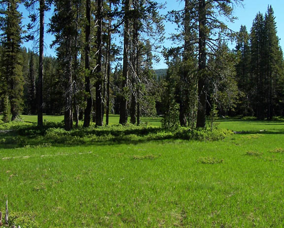Threemile Creek Meadow is bright green with fresh spring grass on a sunny day.