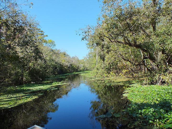 Trees hang over a marshy lake.
