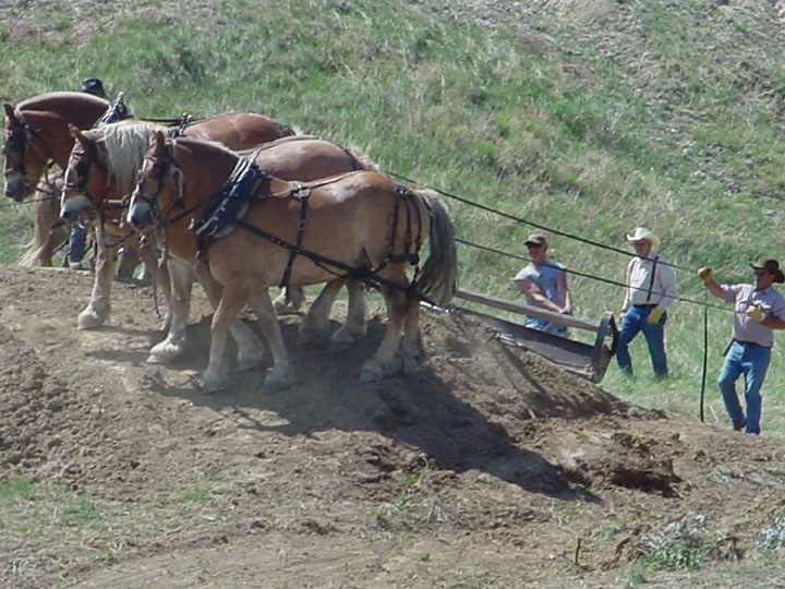 A team of three large draft horses pull a Fresno scraper up an embankment.