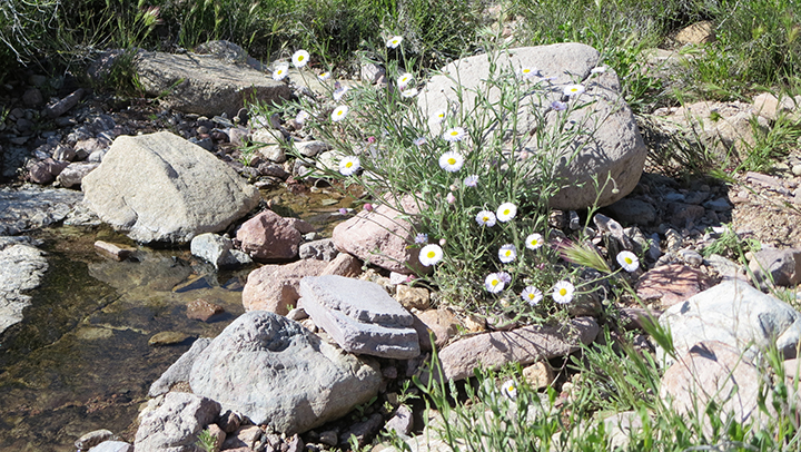 Wildflowers near a small pool