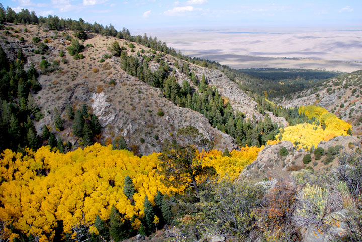 A desert ravine filled with brilliant golden Aspen trees, leading down the valley out towards the great sand dunes far beyond.