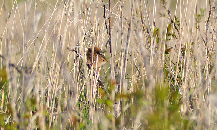 A small bird perches on thin branches in a wetland