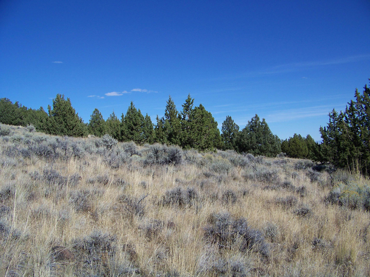 A hill covered in grass and scattered sagebrush and trees, slopes up toward a deep blue sky.