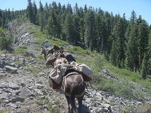A caravan of packed horses traverse a rocky trail on a sloping hillside. The sky is clear and sunny, while the hillside has many coniferous trees growing on it.