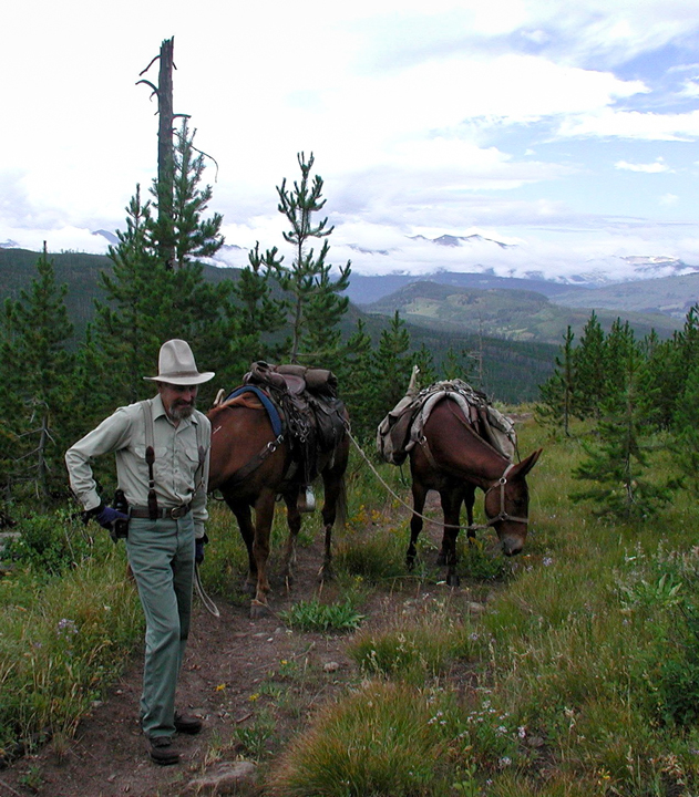 An older man stands with two pack mules in the Teton Wilderness in an area that was affected by the 1988 fires.