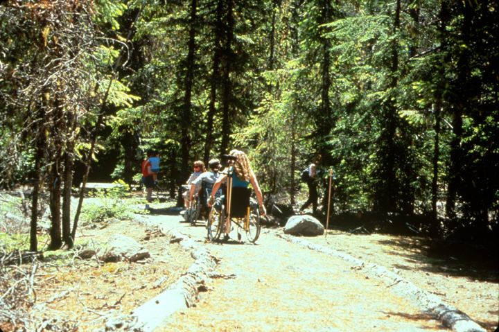 A group of people in wheelchairs explore a forest trail.