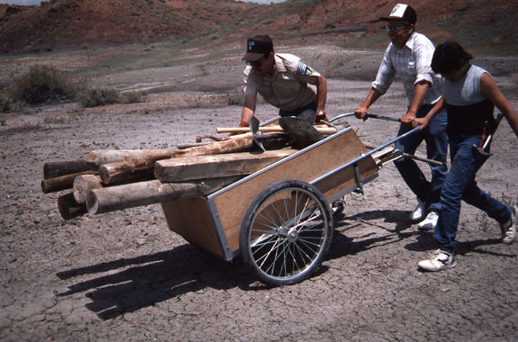 Workers use a wheel barrow to transport wood polls for a fence.