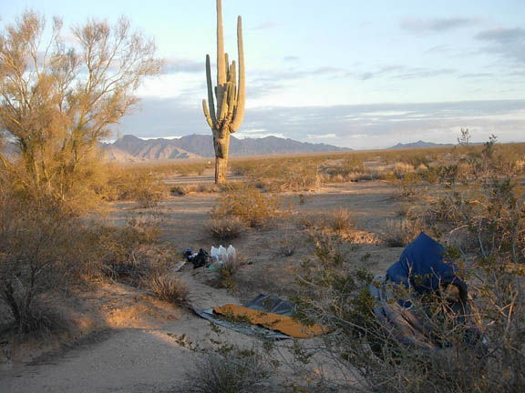 Backpackers set up camp near desert trees and shrubs. A large saguaro cactus stands in the background and in the distance are mountains.