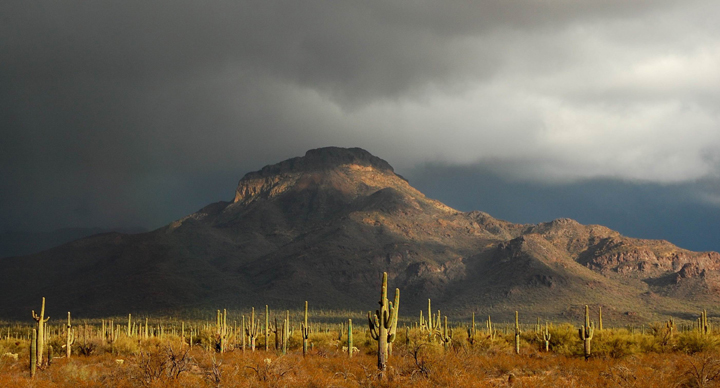 Saguaro cacti grow over a flat desert as a large storm cloud forms over a mountain rising in the background.