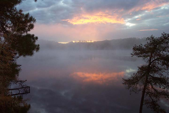 A tranquil sunrise, forest trees framing a view out to a foggy lake, the golden clouds reflecting off the mirror surface of the water.