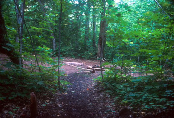 Group campsite at Island Mine. The area is very lush and green and the campsite is a clearing.