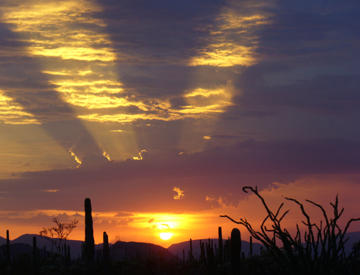 Desert plants are silhouetted along the horizon as shooting rays of red-orange sunlight pierce the clouds.