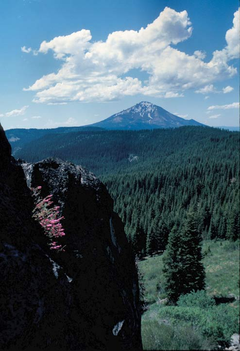A small cluster of pink wildflowers in the foreground, clinging to a rock outcropping above green forest below, stretching away to a high peak along the horizon.