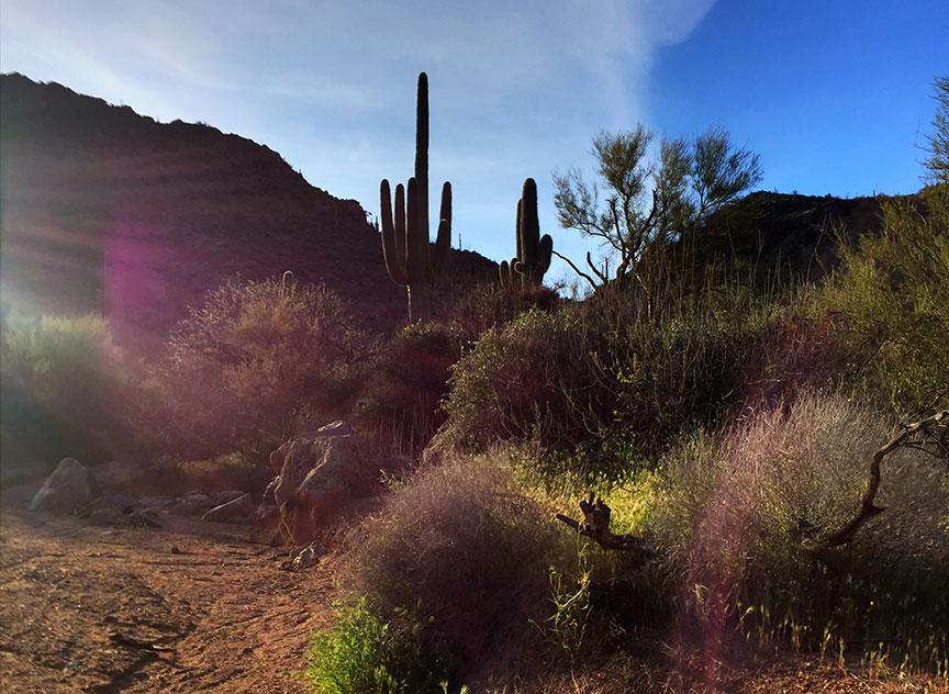 A desert wash with Saguaro Cacti