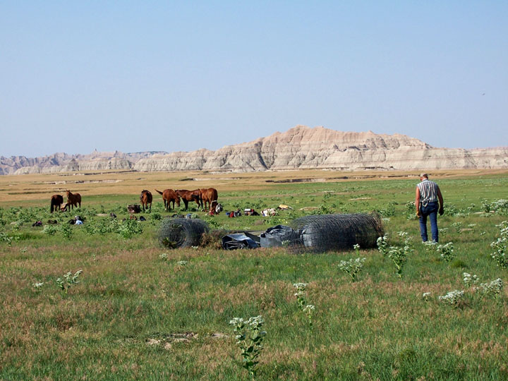 A man standing next to several rolls of fencing, with a group of horses grazing nearby. Barren mountains rise above the grassland in the distance, under a clear blue sky.