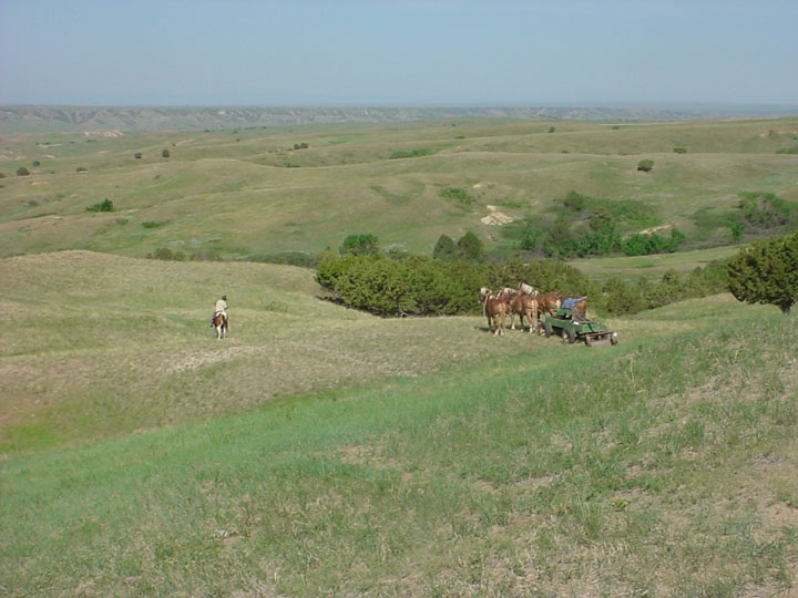 A team of horses pulling a small wagon, with green grassy hills rolling off into the distance.