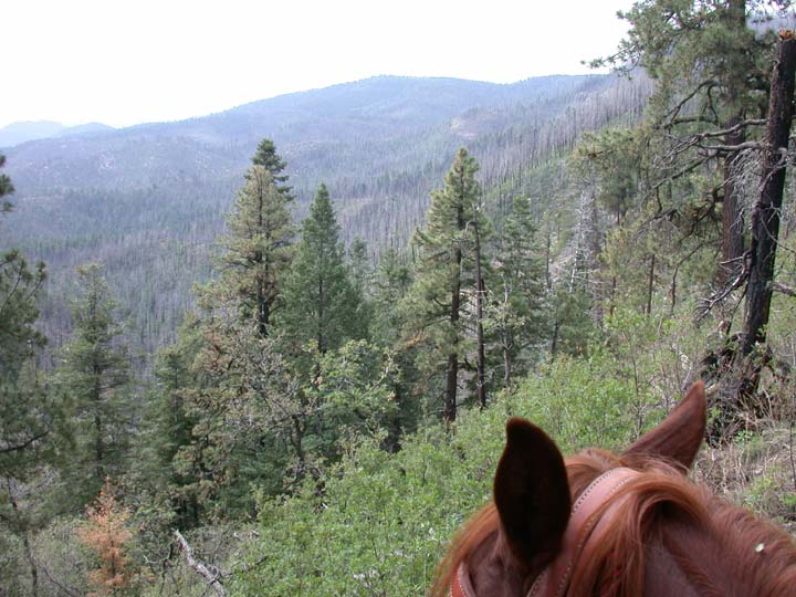 Looking past a horse's head, to a large forest valley fading away into the white hazy horizon.