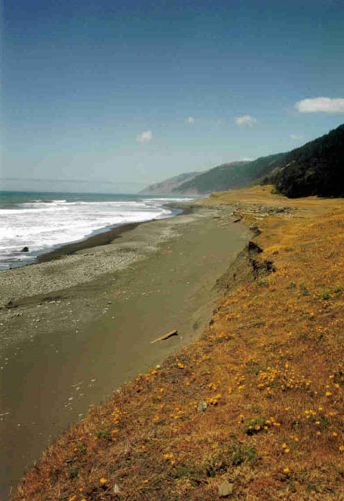 An open beach, a strip of gray sand stretching away between white surf, and yellow grass dotted with orange wild flowers.