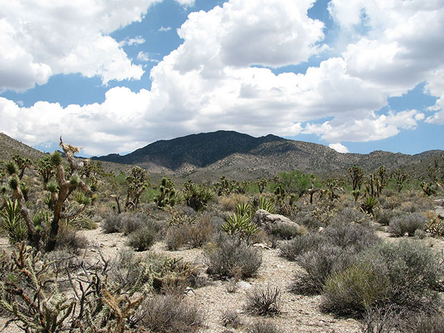 Storm clouds form over the desert speckled with Joshua Trees.