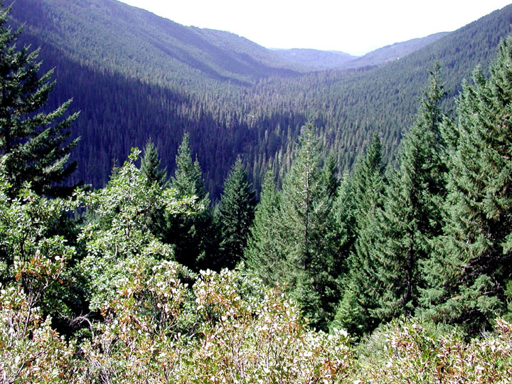 Viewing up a large valley covered in dense green forest.