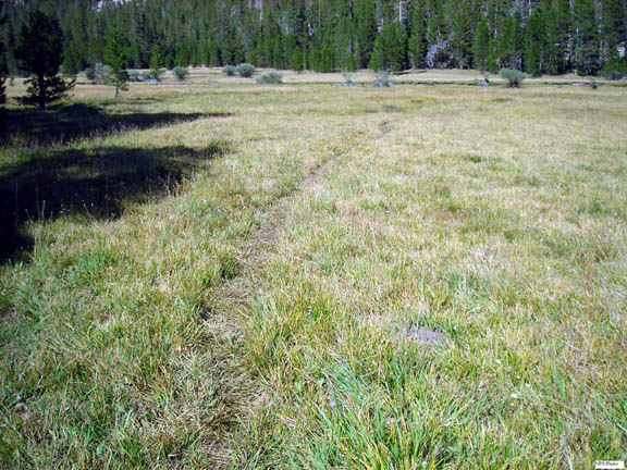 An informal trail created by stock consists of flattened grass in the middle of a vast meadow.