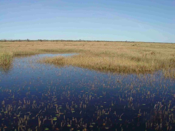 Grasses and other water plants grow out of a large flat wetland.