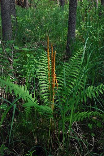 A big green fern