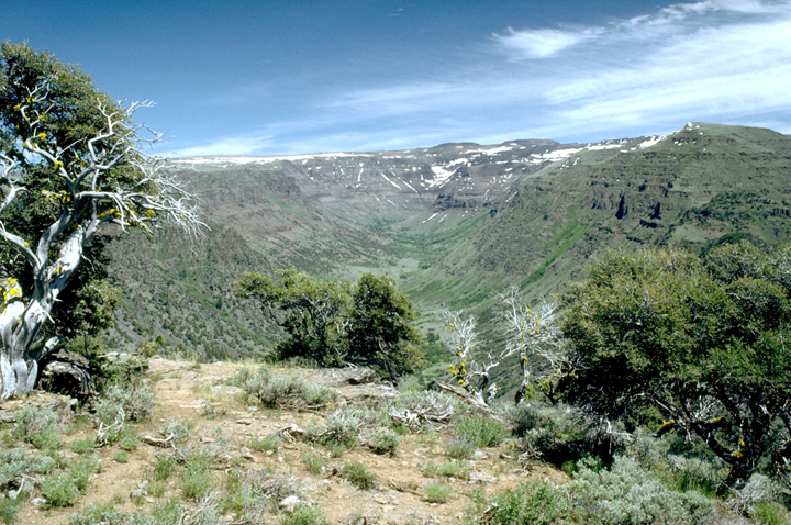 Twisted shrublike trees sit atop a ridge with a large gorge below.