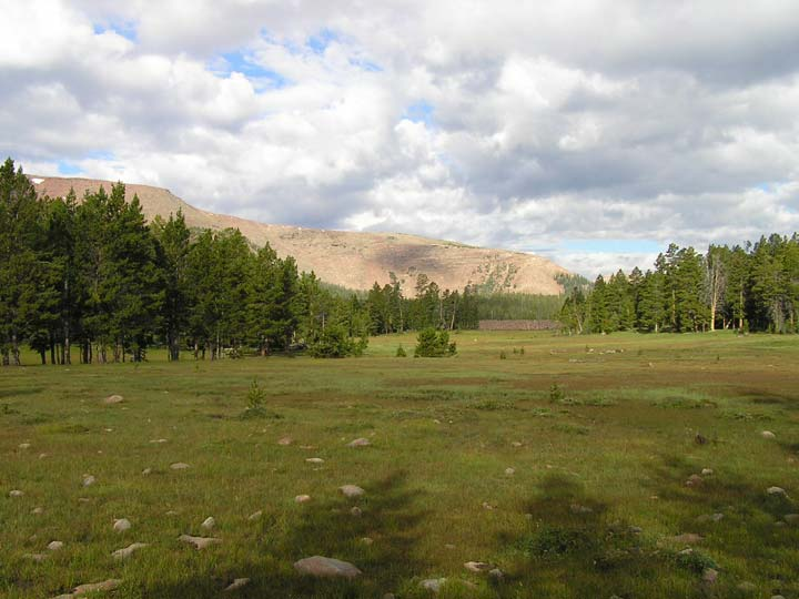 An open grassy green meadow, dotted with rocks, and bordered by tall forest.