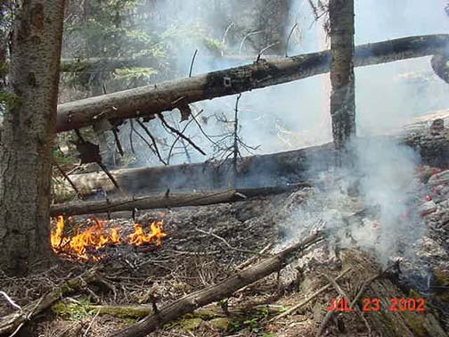 A small fire burning next to the base of a large tree, with the smoldering remains of a forest all around.