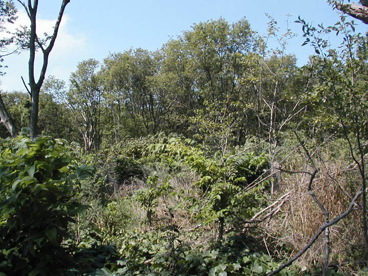 Trees grow out of lush green underbrush that covers the surrounding area.