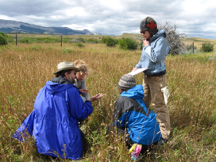 Four members of the University of Montana Wilderness Institute's plant monitoring project on the Boone and Crockett Ranch inspect plant life.