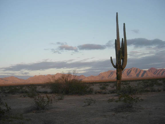 At sunrise/sunset the Growler Mountains are illuminated and shrubs and a Saguaro cactus are in the foreground.
