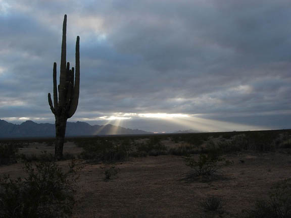 Through a thick layer of clouds, the sun's rays burst onto the landscape. A Saguaro cactus stands in the foreground, off to the left.
