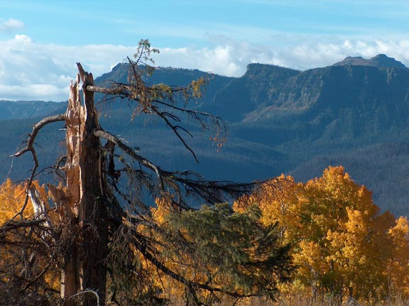 An old snag above a bright yellow forest in autumn color, with high rocky faces rising across the valley in the distance.