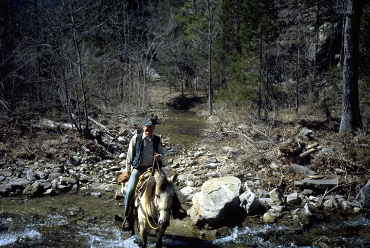 A ranger on horseback, crossing a small rocky stream, flowing through the forest.