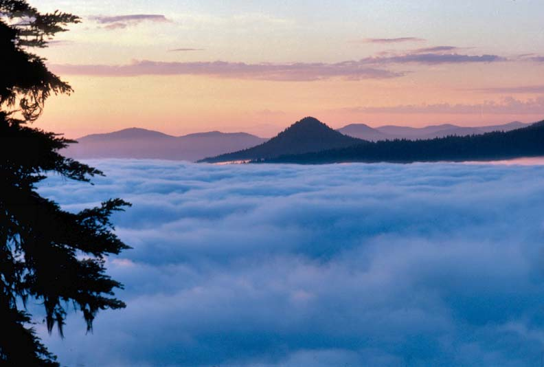 Looking past the silhouetted shape of a large tree, to a sea of blue cotton candy clouds below. A single peak rises above the low hills in the distance, under a pink morning sky.