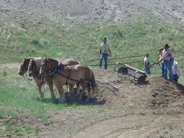 A team of three large draft horses pull a Fresno scraper under the direction of several men.