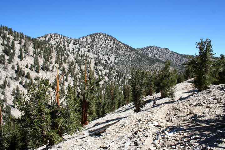 A narrow rocky path traversing a slope of open rock dotted with green pine trees, similar hills stand nearby, on the far side of a ravine.