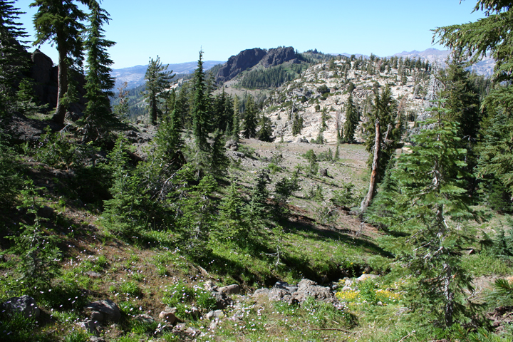 An open forest landscape, sparse trees sprinkled across the landscape, sweeping down to a rolling ridge in the distance.