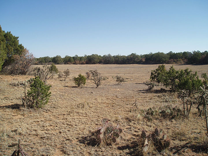 A flat desert mesa is topped with sparce grass and short bushes.