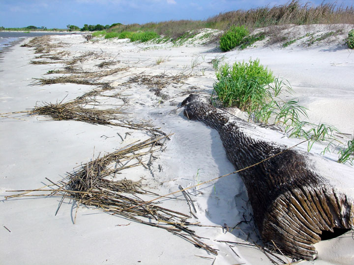 A log lies along the beach, partially buried in white sand. Tall green grass sprouts from the sand periodically.