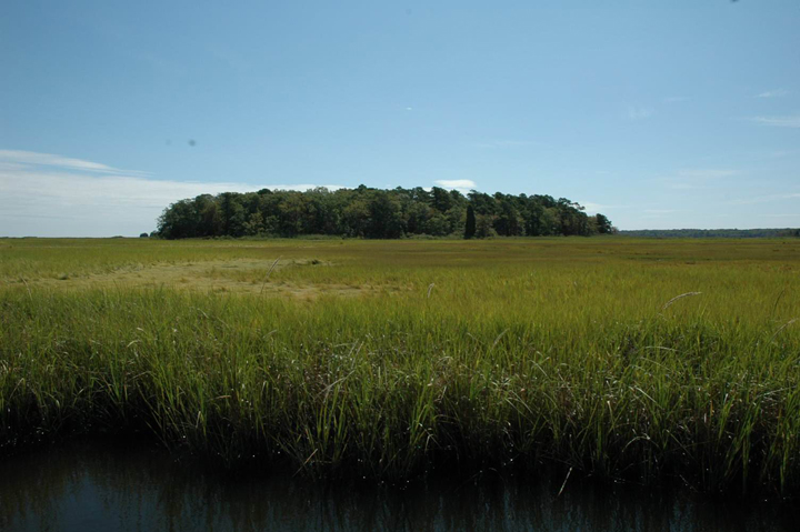 A group of trees grows out of the middle of a green grassy marsh.