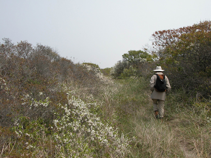 A man hikes along a skinny trail surrouned by tall grasses and coastal foliage.