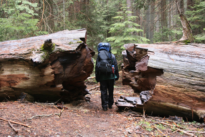 A backpaker stands between  broken, petrified tree trunk peices in the Sequoia-Kings Canyon Wilderness Area.
