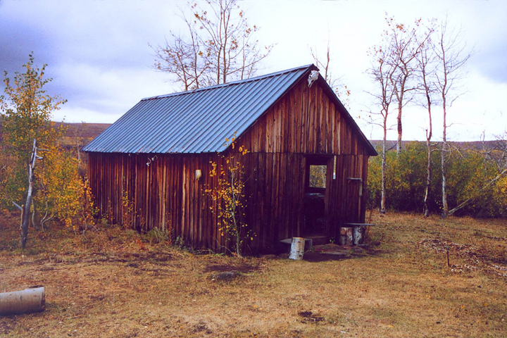 A small cabin sits among a stand of white aspen trees with yellow leaves.