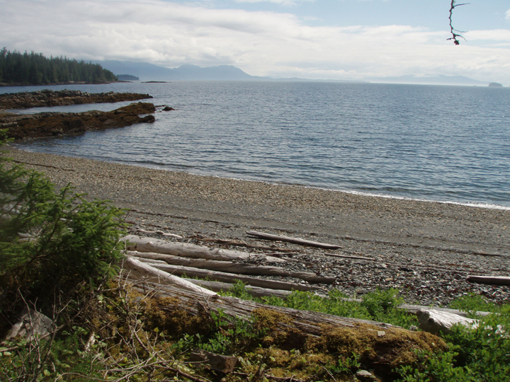 Large driftwood logs line the seashore as water stretches out to the horizon.
